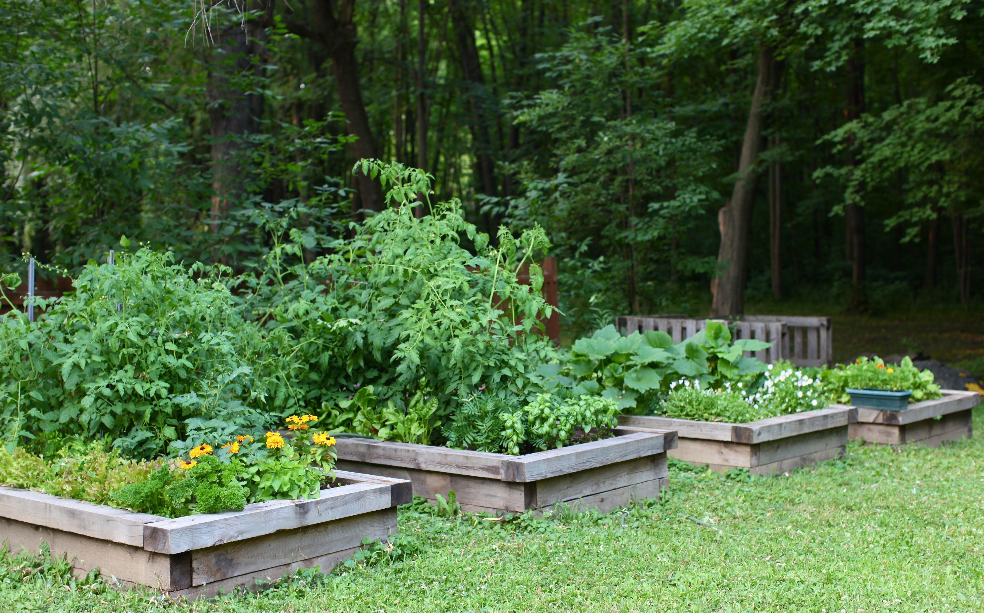 garden grow: summer update from my backyard   simple bites