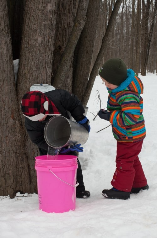 How to make maple syrup on simplebites.net