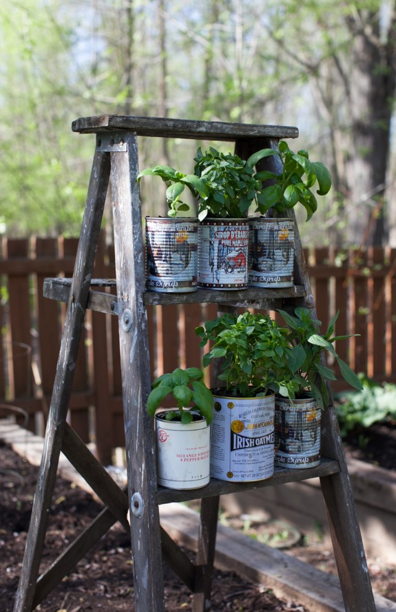 recycled tin cans for potted herbs