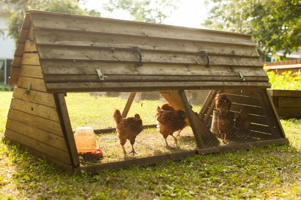 Simple Bites homestead - The chicken coop