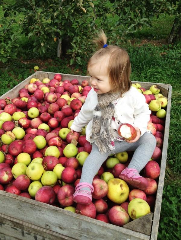 clara apple picking