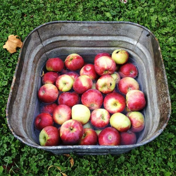 apple haul