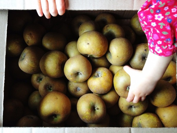 box of Russets