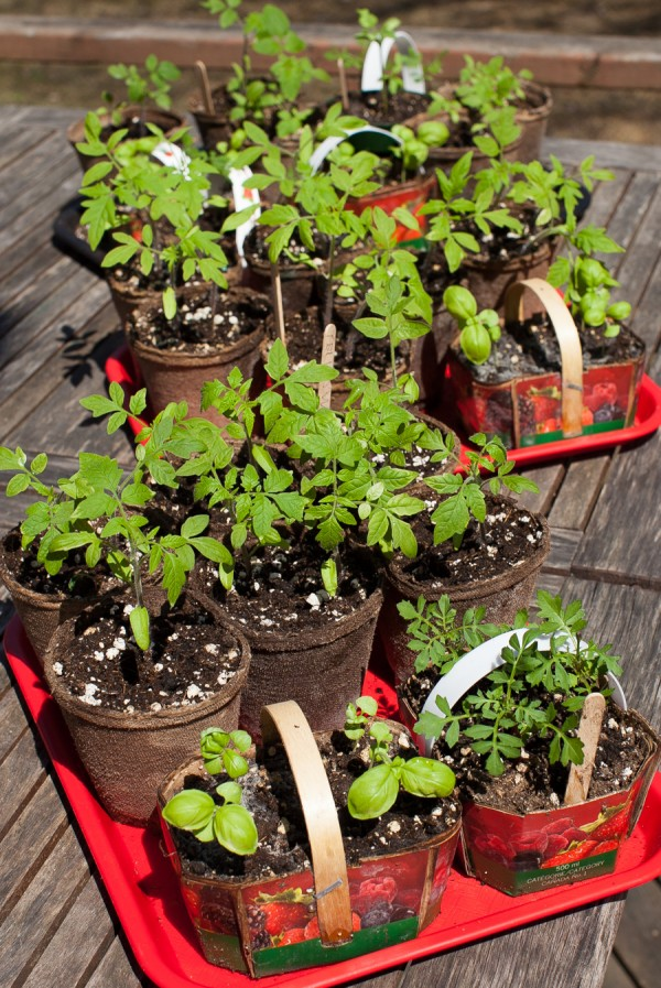 Spring seedlings