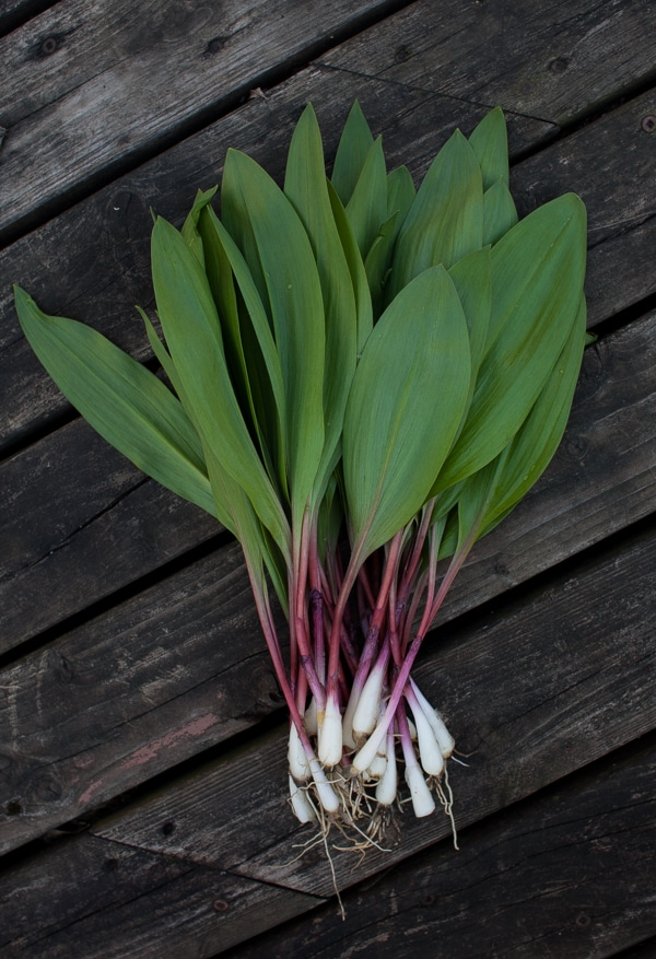 bundle of ramps | Simple Bites #foraging