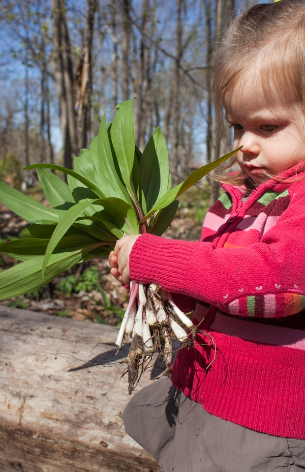 Harvesting ramps | simple bites #foraging
