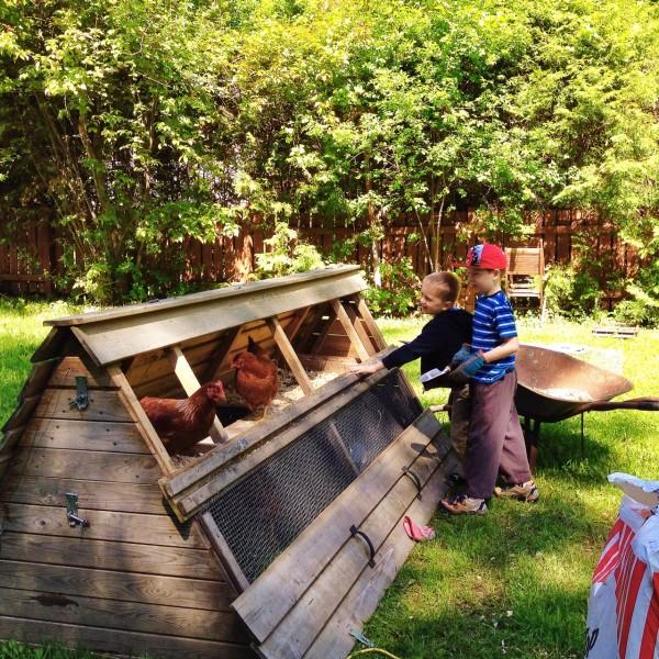 kids cleaning chicken coop. #backyardchickens #urbanchickens #hens   Simple Bites