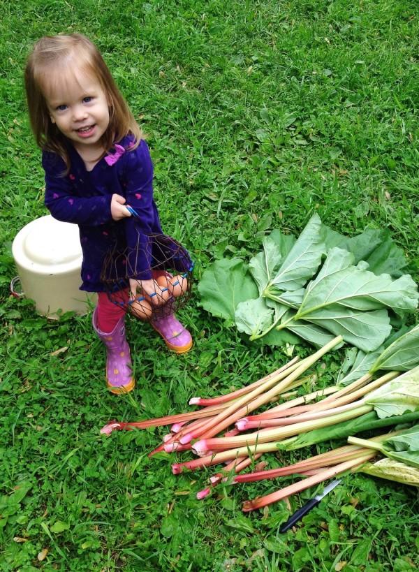 rhubarb haul