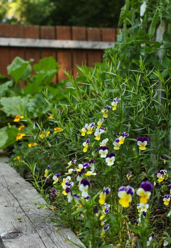 A Garden Tour | Simple Bites pansies-1