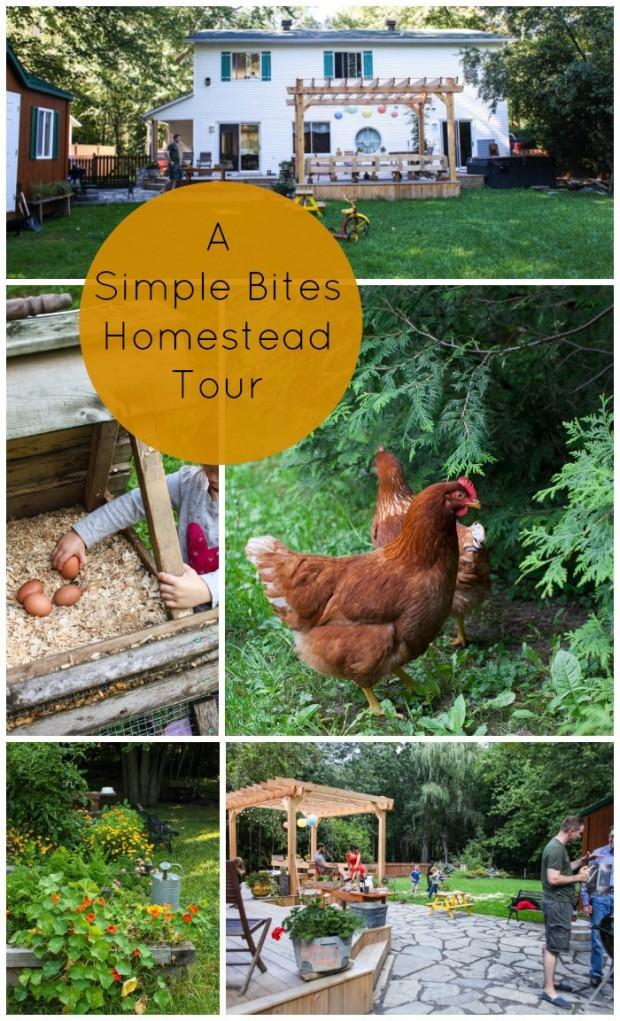 A Simple Bites urban homestead tour | Simple Bites #urbanhomestead #diy #homesteading