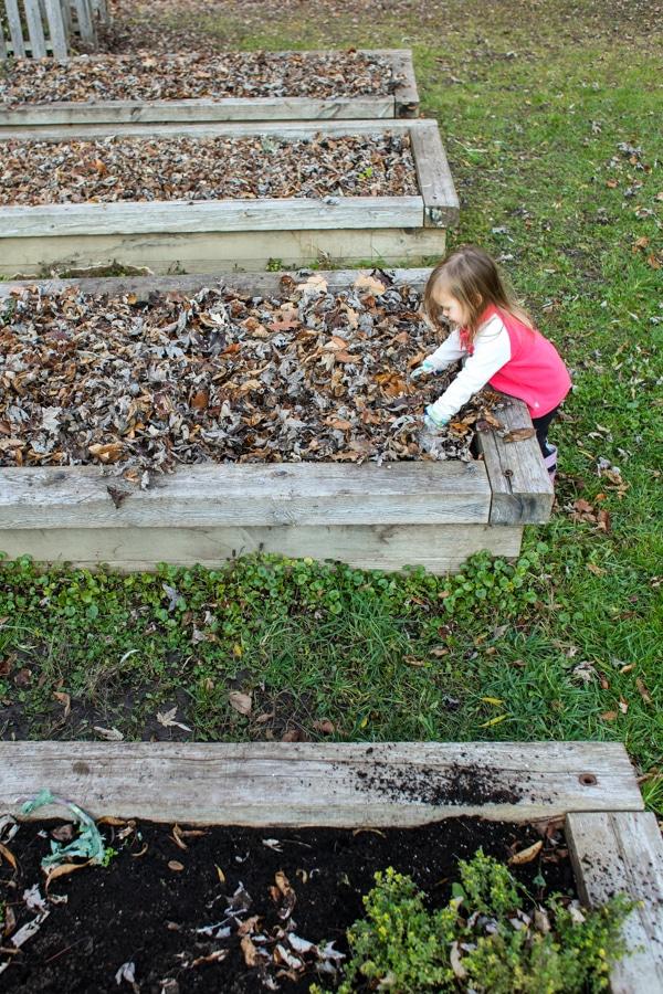 Why I mulch my garden in late fall