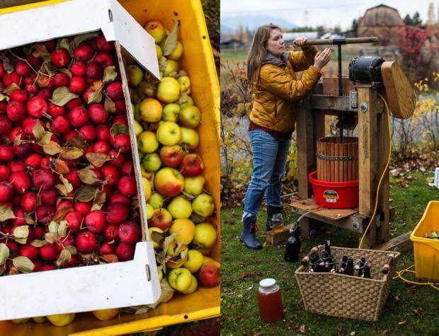 pressing apple cider