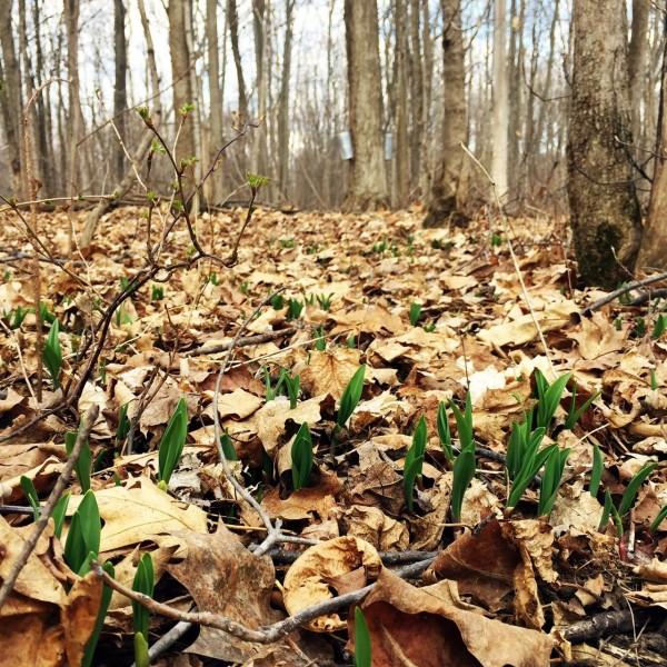 spring ramps