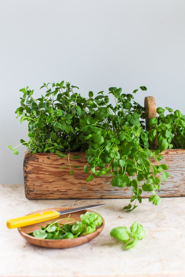 Grow herbs-1