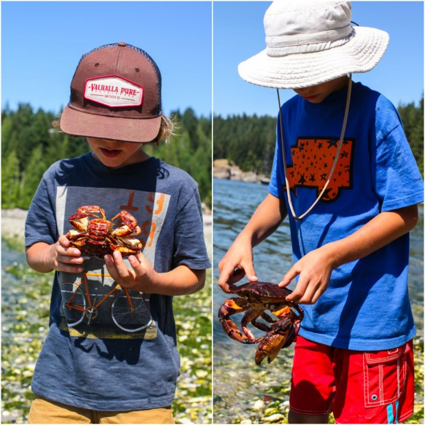 Catching crabs on Cortes Island, BC || Simple Bites