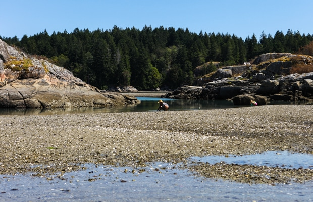 Low tide clamming on Cortes Island, BC || Simple Bites