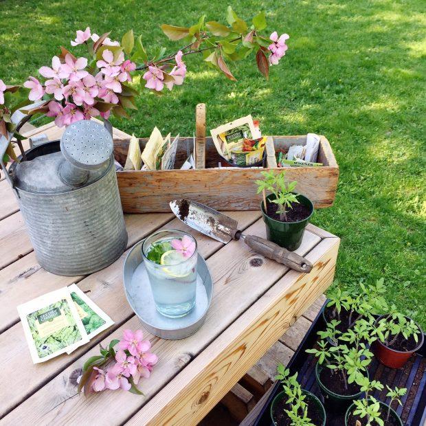 Planting seeds | Simple Bites