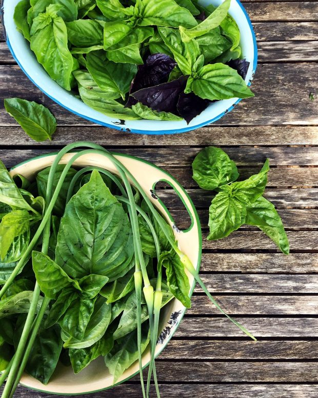 basil scapes