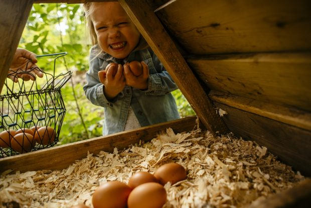 Raising Healthy Eaters || Simple Bites || Collecting eggs