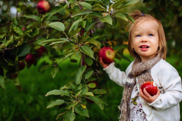 Clara picking apples | Simple Bites