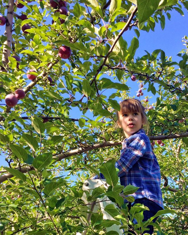 Clara picking apples