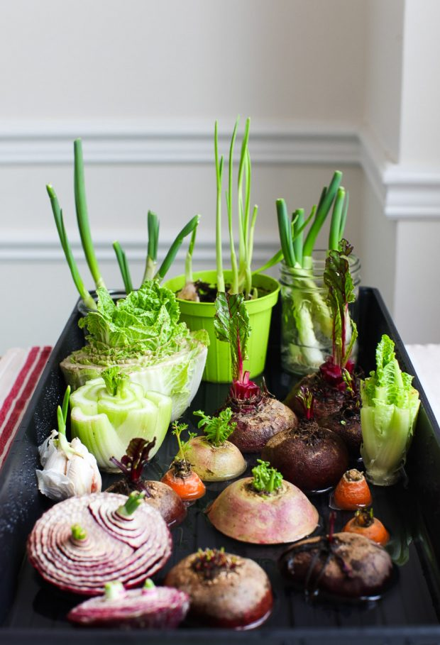 10 Vegetables You Can Regrow from Kitchen Scrap • Oh Snap! Lets Eat! | Vegetables, Fresh basil